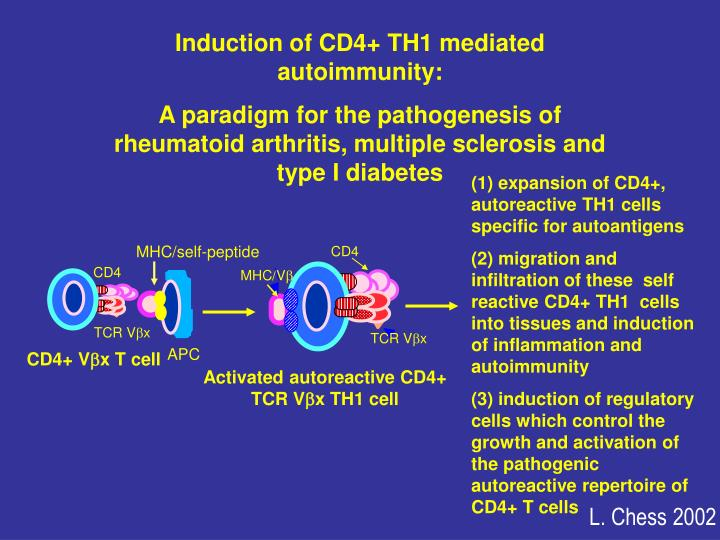 Induction of CD4+ TH1 mediated autoimmunity:
