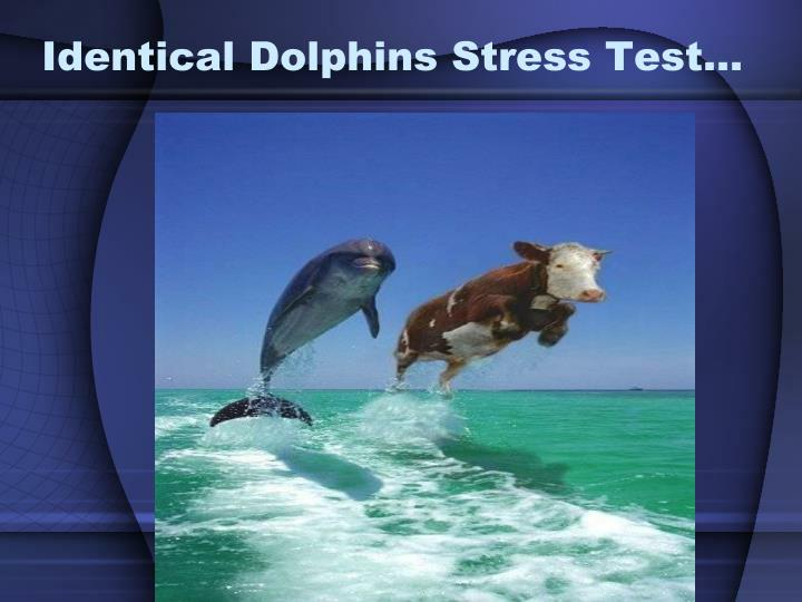 Identical Dolphins Stress Test…