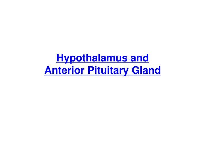Hypothalamus and