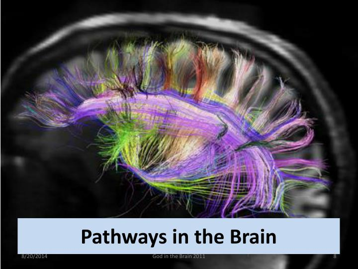 Pathways in the Brain
