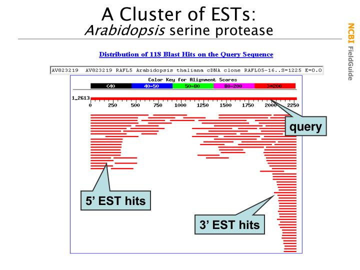 A Cluster of ESTs: