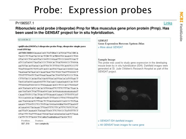 Probe:  Expression probes