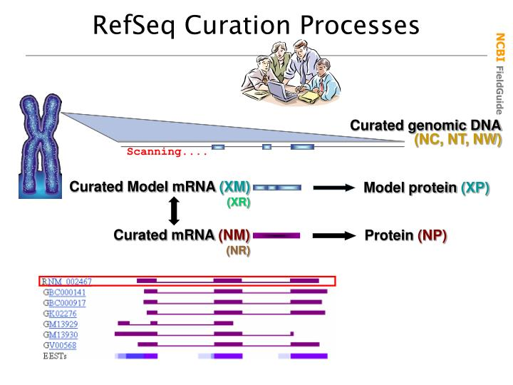 RefSeq Curation Processes
