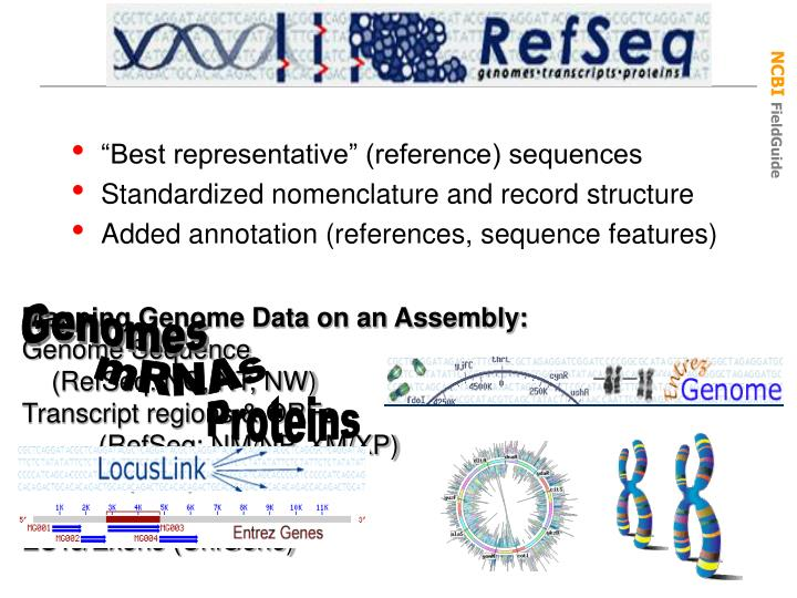 """""""Best representative"""" (reference) sequences"""