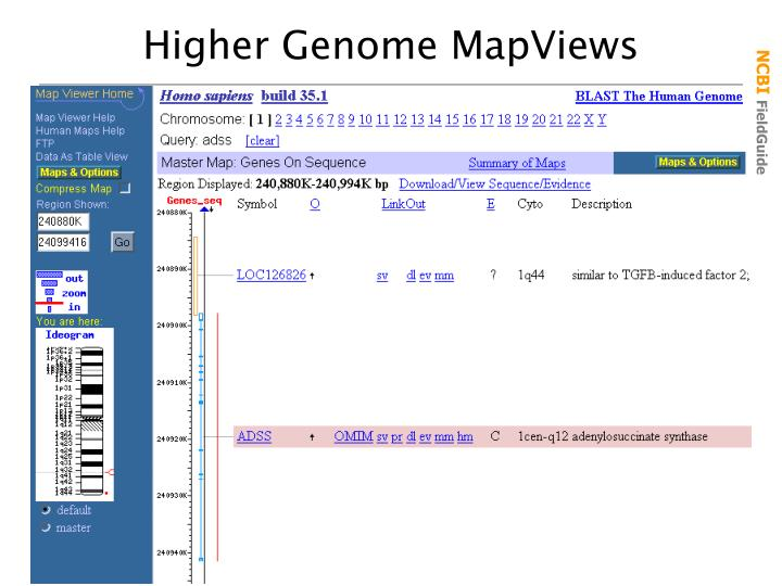 Higher Genome MapViews