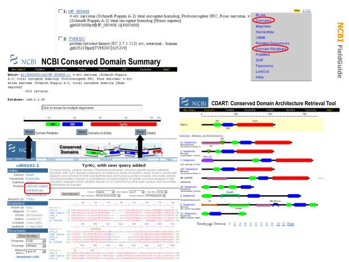 NCBI Conserved Domain Summary