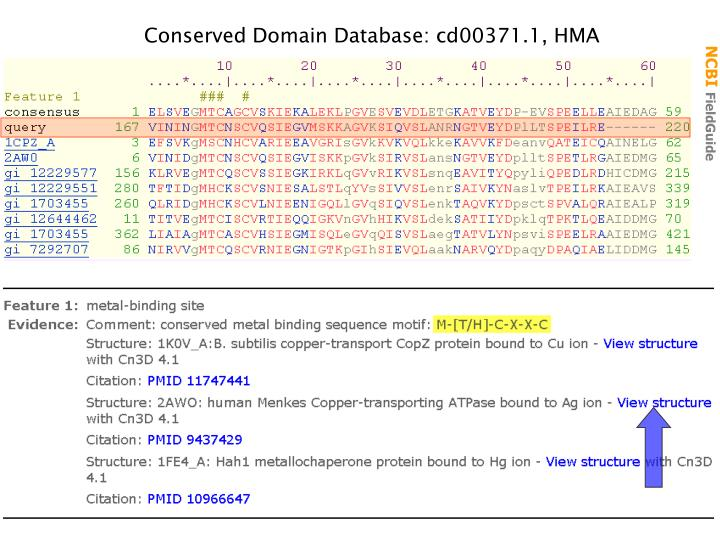 Conserved Domain Database: cd00371.1, HMA