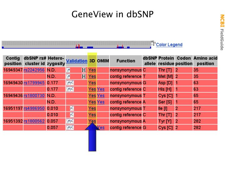 GeneView in dbSNP
