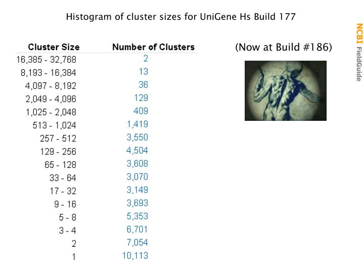 Histogram of cluster sizes for UniGene Hs Build 177