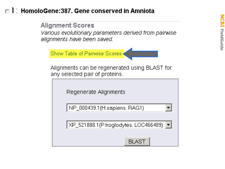 Homologene: alignment scores