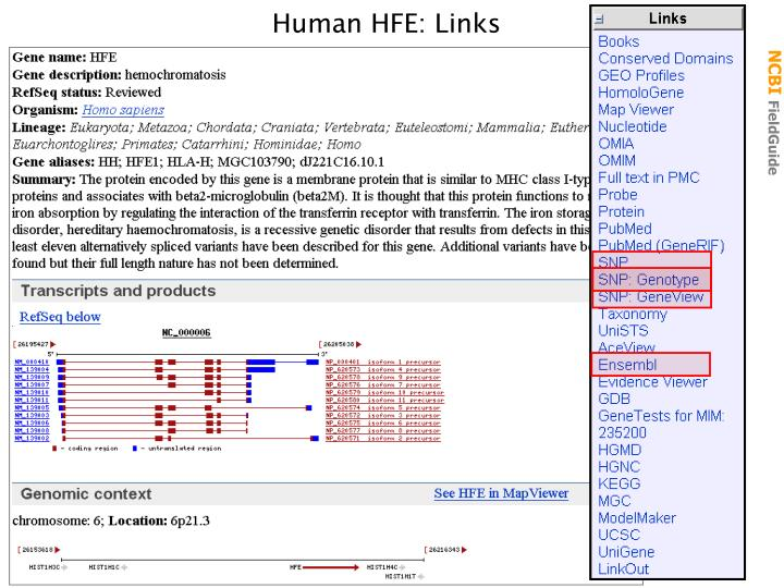 Human HFE: Links