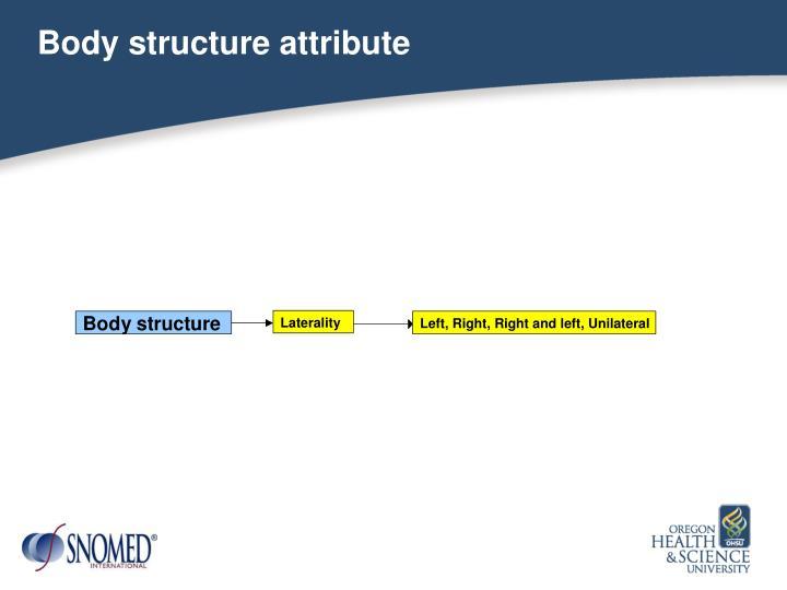 Body structure attribute