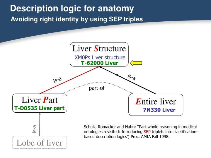 Description logic for anatomy