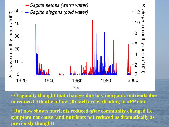 Sagitta setosa (warm water)