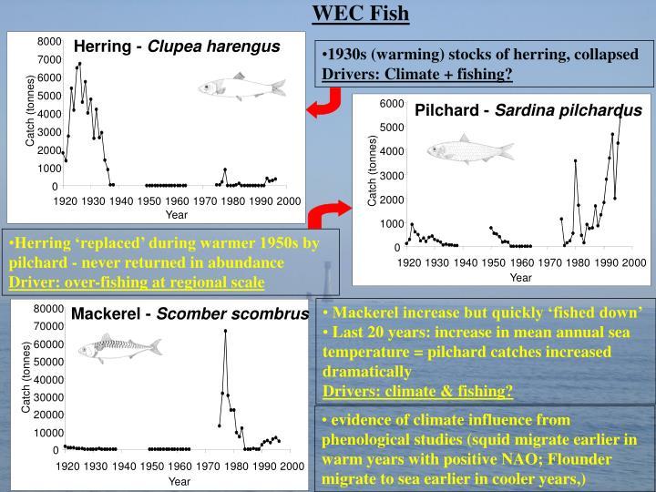 WEC Fish