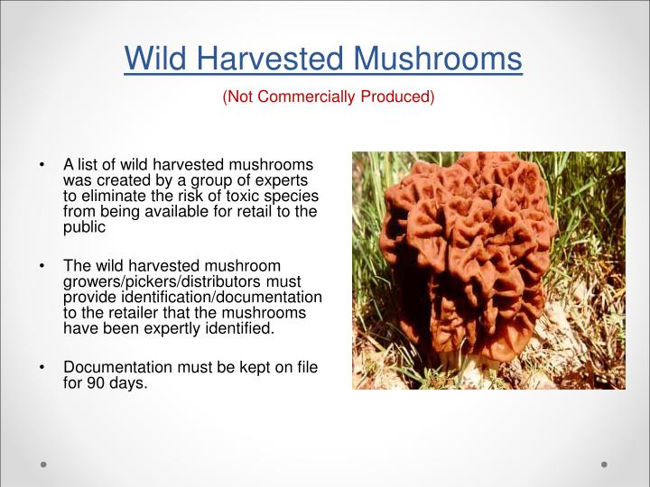 Wild Harvested Mushrooms