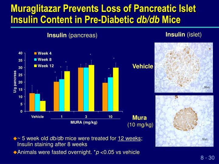 Muraglitazar Prevents Loss of Pancreatic Islet Insulin Content in Pre-Diabetic