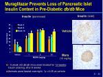 muraglitazar prevents loss of pancreatic islet insulin content in pre diabetic db db mice