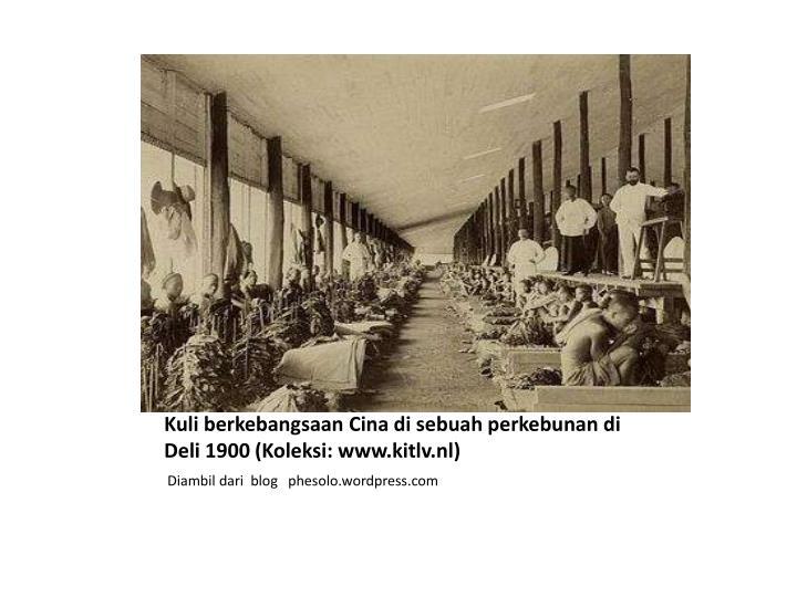 Kuli berkebangsaan Cina di sebuah perkebunan di Deli 1900 (Koleksi: www.kitlv.nl)