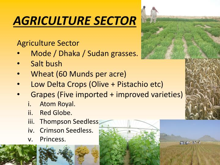 AGRICULTURE SECTOR