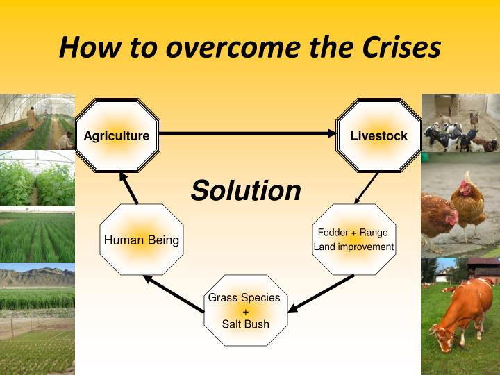 How to overcome the Crises