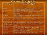 common tree species