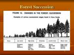 forest succession1
