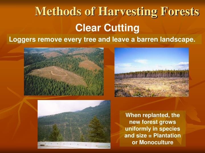 Methods of Harvesting Forests