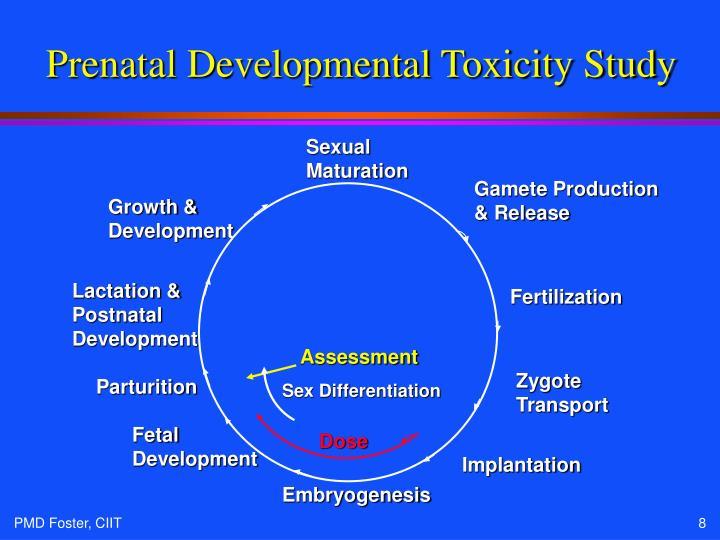 Prenatal Developmental Toxicity Study
