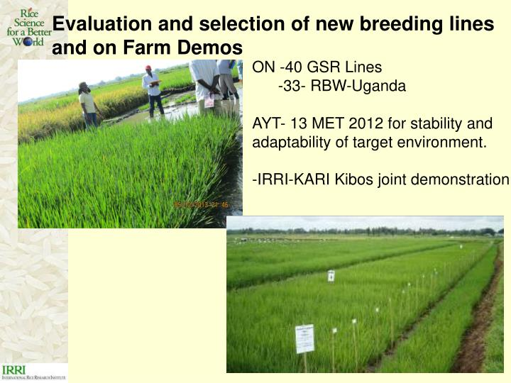 Evaluation and selection of new breeding lines and on Farm Demos