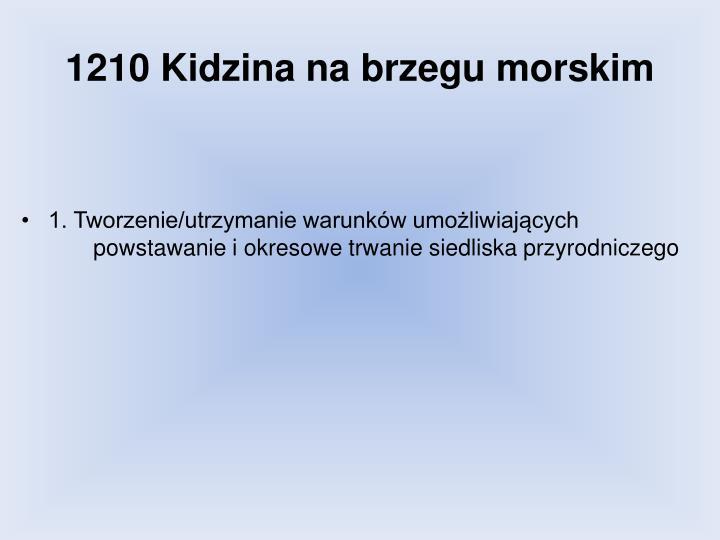 1210 Kidzina na brzegu morskim