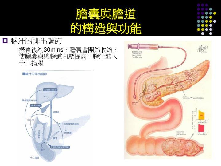 膽囊與膽道