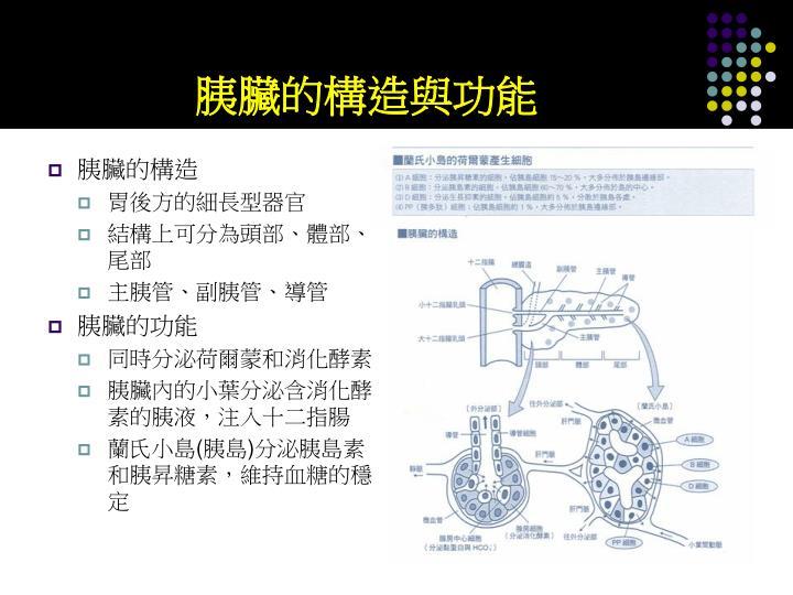 胰臟的構造與功能