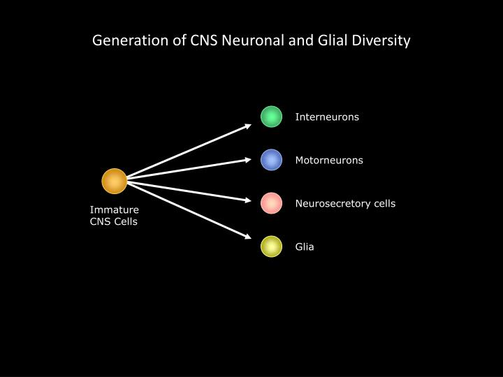 Generation of CNS Neuronal and Glial Diversity