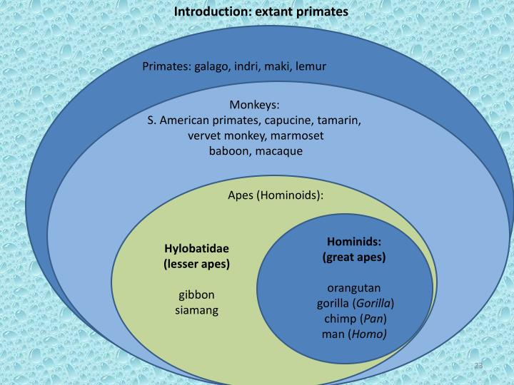 Introduction: extant primates