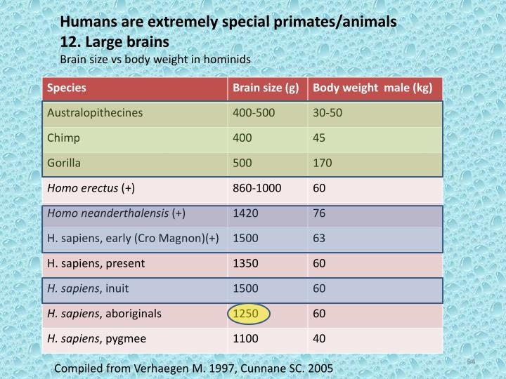 Humans are extremely special primates/animals
