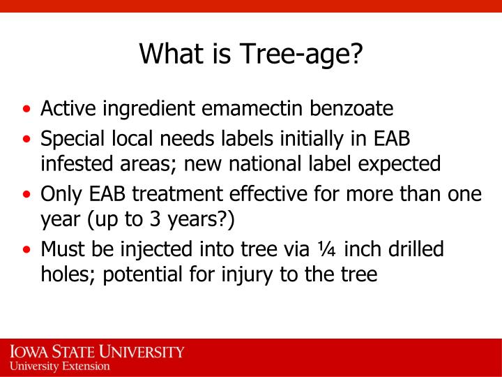 What is Tree-age?