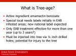 what is tree age