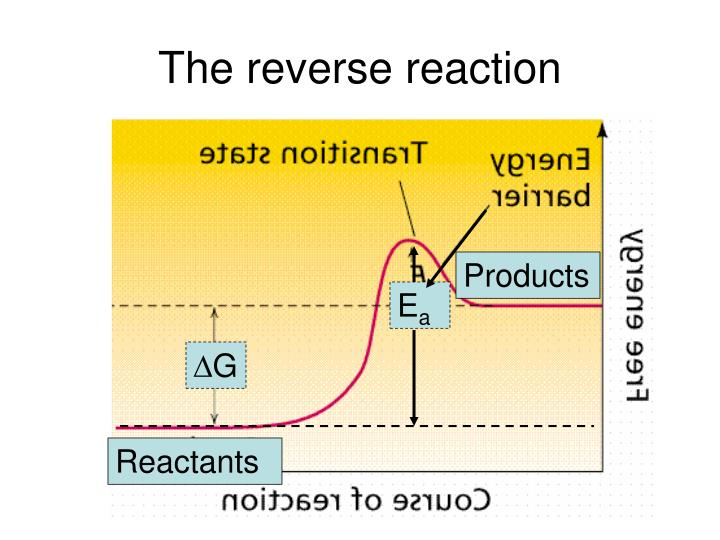 The reverse reaction