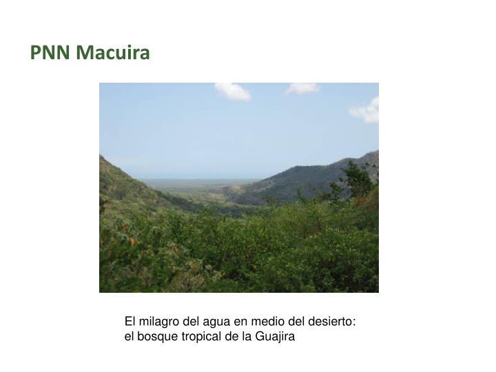 PNN Macuira
