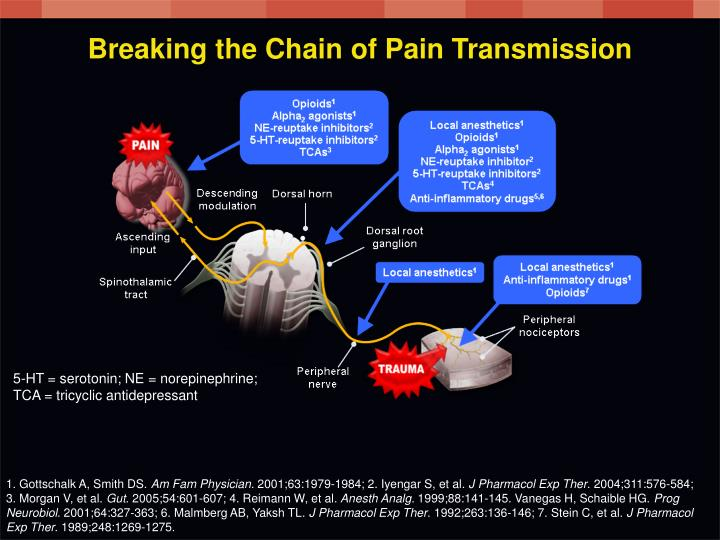 Breaking the Chain of Pain Transmission