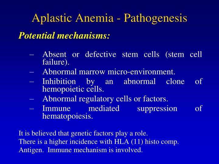 Aplastic Anemia - Pathogenesis