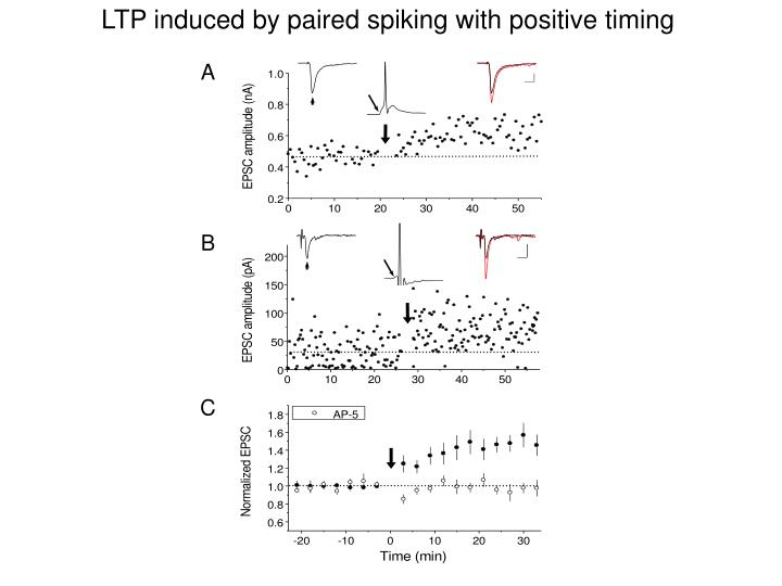 LTP induced by paired spiking with positive timing