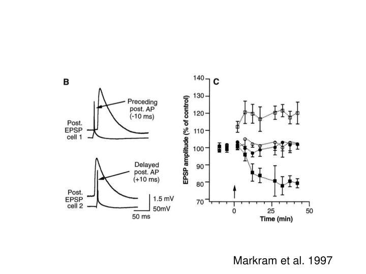 Markram et al. 1997