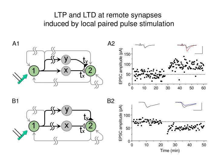 LTP and LTD at remote synapses