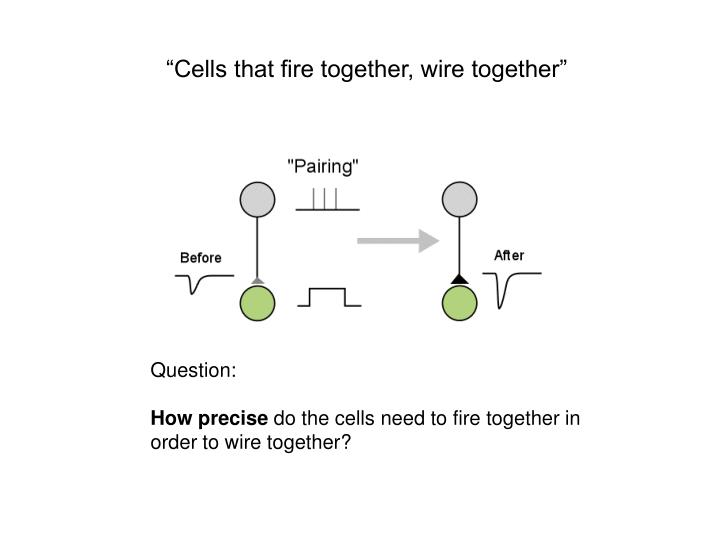 """""""Cells that fire together, wire together"""""""