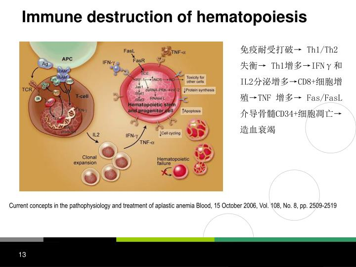Immune destruction of hematopoiesis