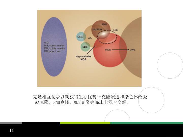 克隆相互竞争以期获得生存优势→克隆演进和染色体改变