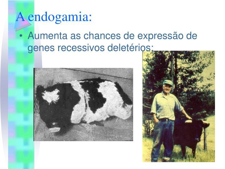 A endogamia: