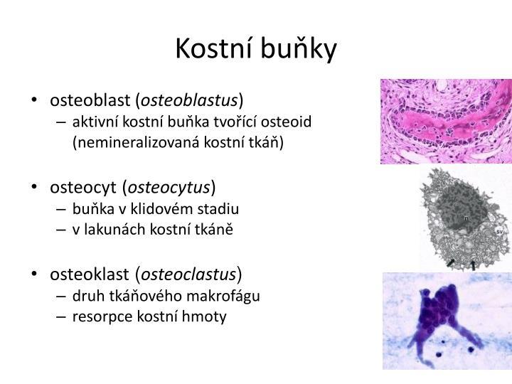 Kostní buňky